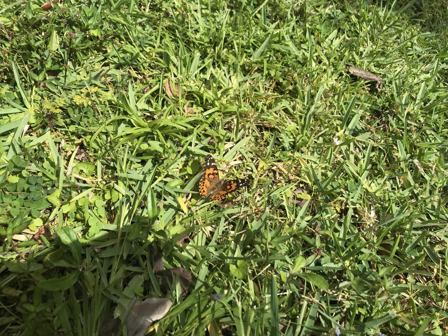 A+butterfly+takes+flight+into+the+grass+once+its+muscles+warm+up.